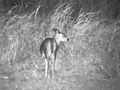 Bushnell 6x50mm Equinox Z Night monocular/binoculars/camera